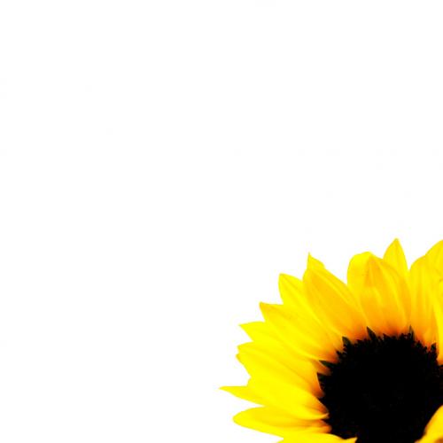 テンプレート「Yellow Vecter」